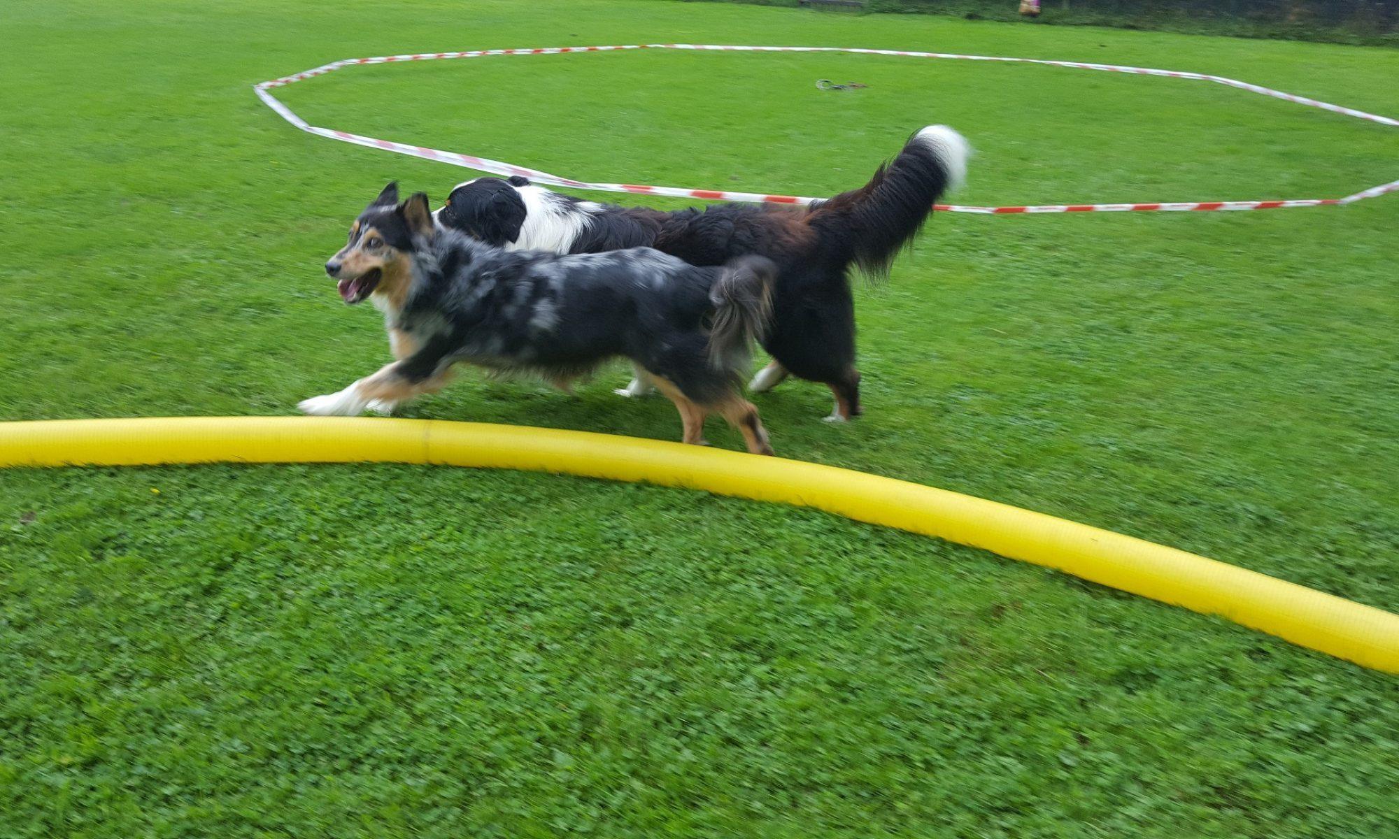 Hundefreunde Lengerich e.V.